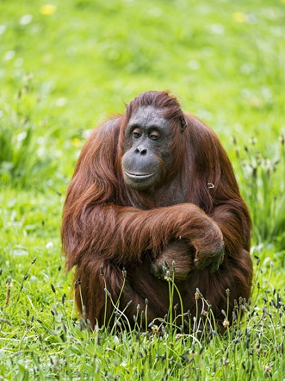 Sit down like this orangutan and don't do anything. After a while working seems so interesting.